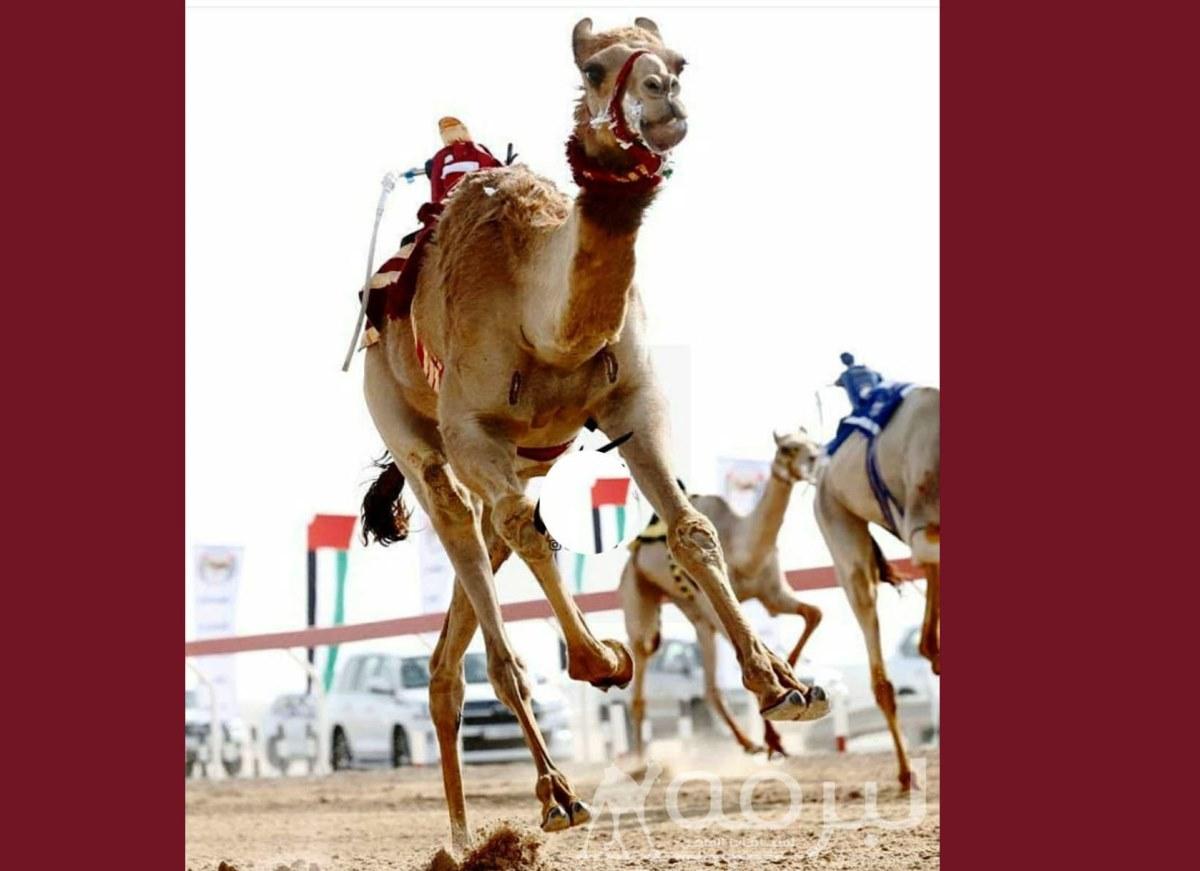شعار الهديفي يحلق في سماء أبوظبي بأقوى رموز اللقايا