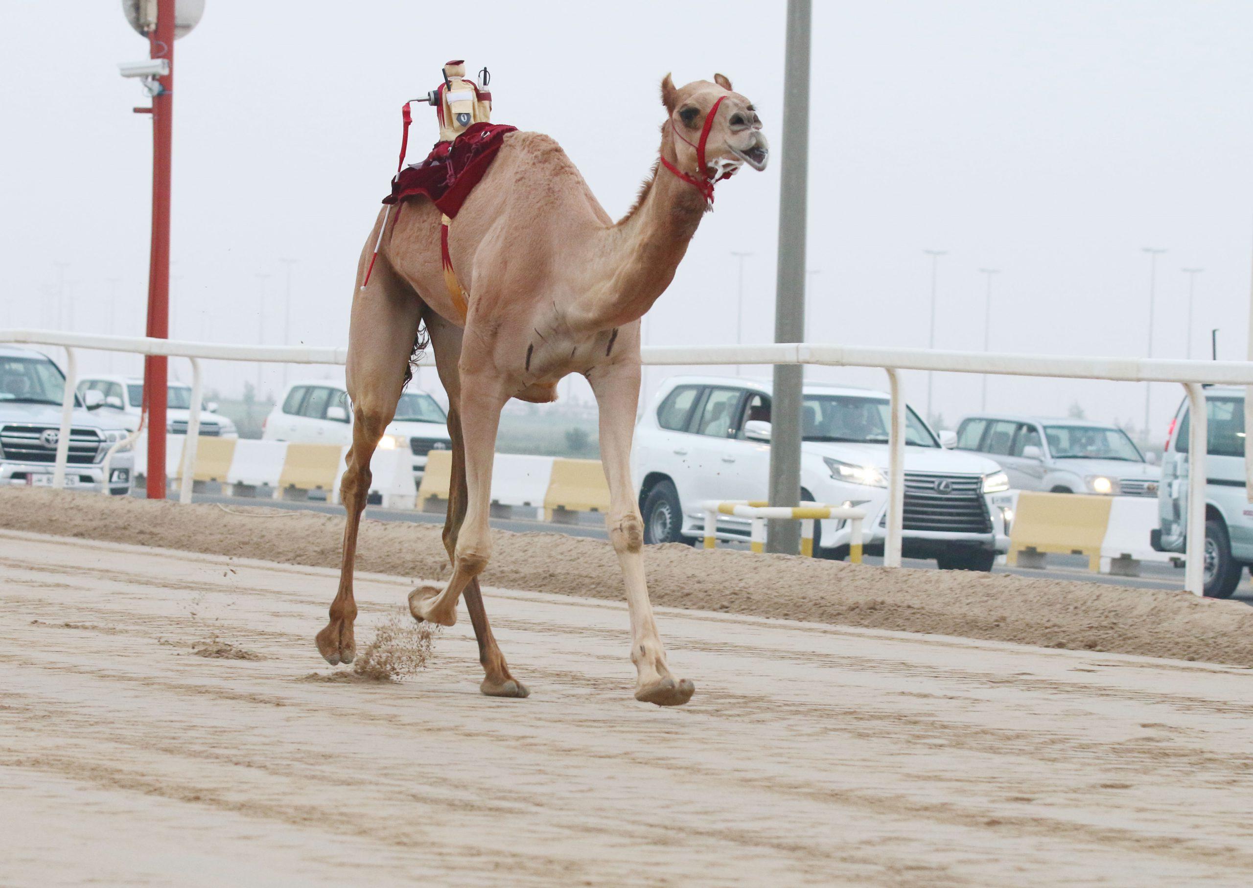 شعار الشهواني يتزعم رئيسي الحيل مفتوح والحيل عمانيات